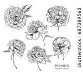 beautiful peonies set. hand... | Shutterstock .eps vector #687389563