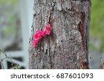 A Branch With Bougainvilla...