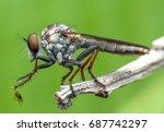 insect macro shot  | Shutterstock . vector #687742297