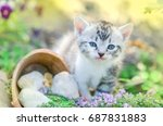 Stock photo little kitten sitting in flowers kitten sitting near a flowerbed curious gray kitten 687831883