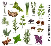 spices and herbs vector... | Shutterstock .eps vector #687878113