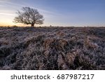 A Single Oak Tree Near Fritham...
