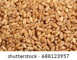 Small photo of wheat berry