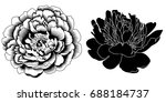 graphical black and white peony ...