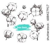 vector cotton plant  hand drawn ... | Shutterstock .eps vector #688427917