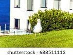 Seagull On Green Field. Seagul...