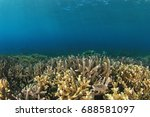 shallow reef of hard corals... | Shutterstock . vector #688581097