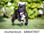 english staffordshire... | Shutterstock . vector #688647847