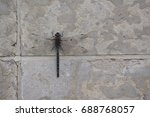 Small photo of Aeshna canadensis Dragonfly on wall