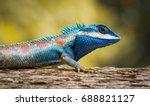 blue thai chameleon on tree... | Shutterstock . vector #688821127