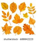 autumn season leaves collection.... | Shutterstock .eps vector #688842223