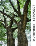 tree | Shutterstock . vector #689093377