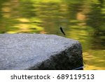 A Small Dragonfly Rests On A...