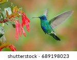 hummingbird with red flower.... | Shutterstock . vector #689198023
