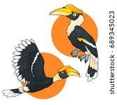 Hornbill Bird Cartoon Set