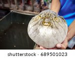 close up of inflated puffer... | Shutterstock . vector #689501023