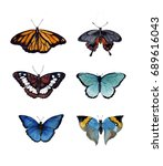 watercolor butterfly set.... | Shutterstock . vector #689616043
