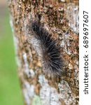 Small photo of order Lepidoptera, fat hairy worm creeping slowly on brown rough wet tropical tree bark surface with lichens in summer time outdoor selective focus blur background