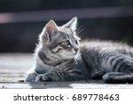 close up portrait of a grey... | Shutterstock . vector #689778463