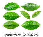 Green Tea Leaf Isolated On...