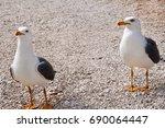 Couple Of Seagulls. Seagull...