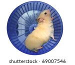 Hamster In A Wheel Over White...