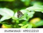 Small photo of Ypthima baldus Butterfly