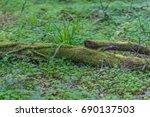 Green Moss Growing On Logs ...