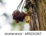 Tree Dead Roses Hanging On A...