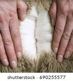 merino wool | Shutterstock . vector #690255577