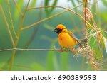 beautiful of asian golden... | Shutterstock . vector #690389593