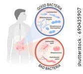 probiotics. gut flora  good ... | Shutterstock .eps vector #690435907
