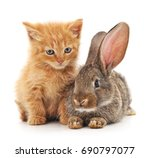 Stock photo cat and rabbit isolated on a white background 690797077
