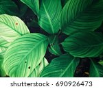 green leaves background   Shutterstock . vector #690926473