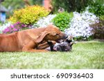 two young dogs playing and... | Shutterstock . vector #690936403