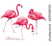 tropical bird flamingos. vector. | Shutterstock .eps vector #690938533