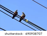 Two Pigeon On Black Wire With...