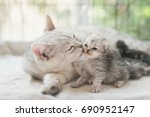 Stock photo american shorthair cat kissing her kitten with love 690952147