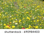 Flower Field With Assorted...