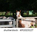 paint cribbing fence   Shutterstock . vector #691023127