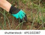 gloves claws weeding weeds in... | Shutterstock . vector #691102387