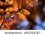 illuminated golden autumn...
