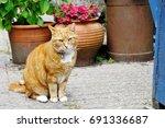 cute beautiful adorable red cat ...   Shutterstock . vector #691336687