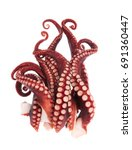 Tentacles Of Octopus Isolated...