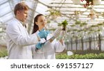 in the industrial greenhouse... | Shutterstock . vector #691557127