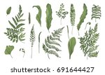fern realistic collection. hand ... | Shutterstock .eps vector #691644427