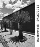 Small photo of Yucca Tree Garden Landscape Black Adobe House Marfa Texas