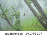 Small photo of Spiders or Araneae are air-breathing arthropods that have eight legs
