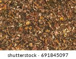 Colorful Autumn Fallen Leaves...