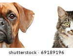 Stock photo dogs and cats half of muzzle close up portrait on a white background 69189196